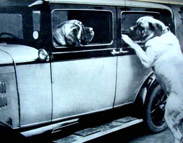 Vintage Car with Dogs